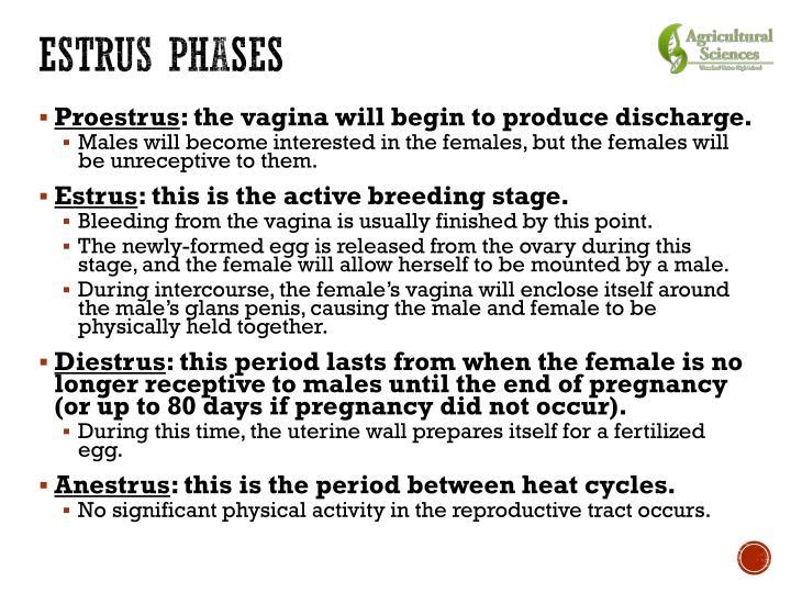 Estrus Phases