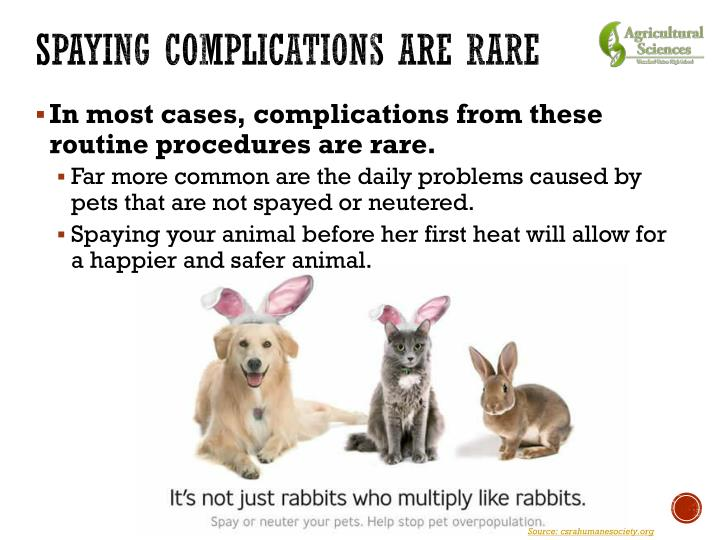 Spaying Complications are Rare