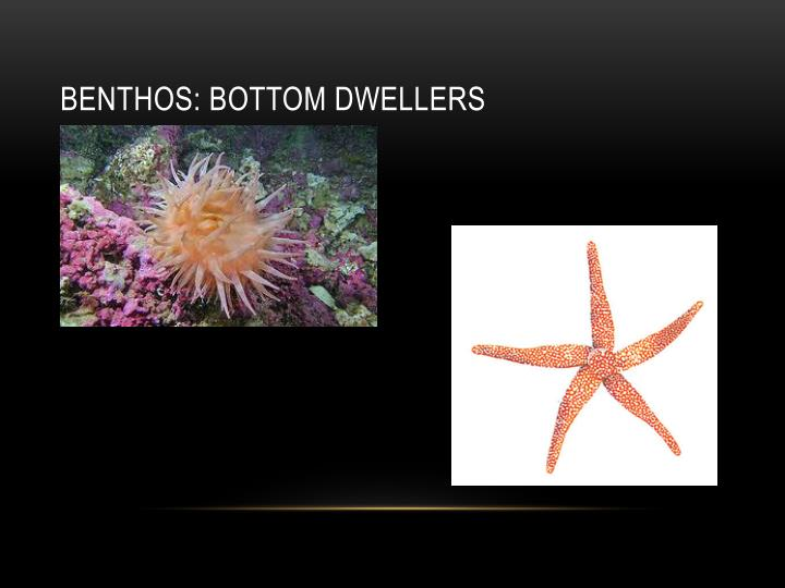 BENTHOS: Bottom Dwellers
