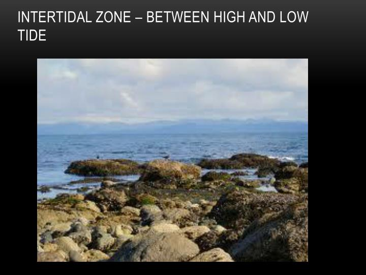Intertidal Zone – between high and low tide