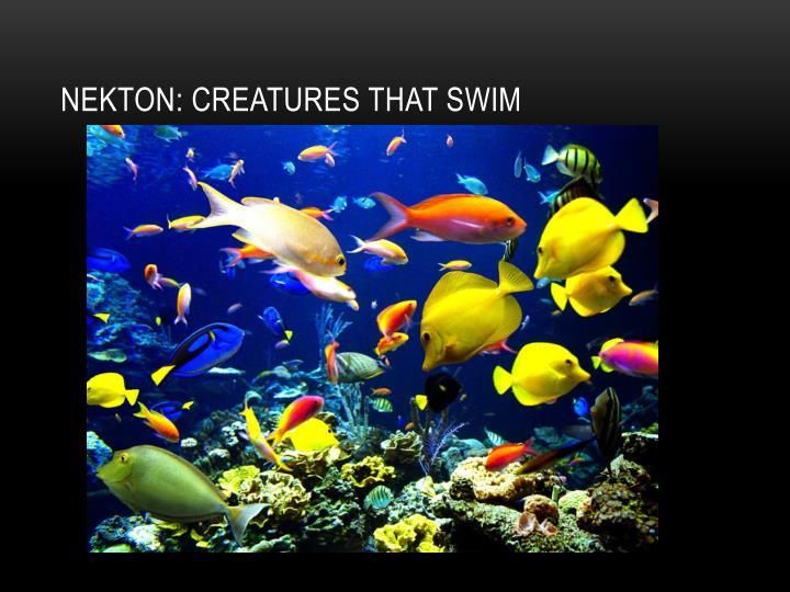 Nekton: Creatures that swim