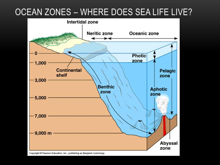 Ocean Zones – Where Does Sea life live?