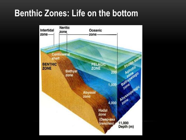 Benthic Zones: Life on the bottom