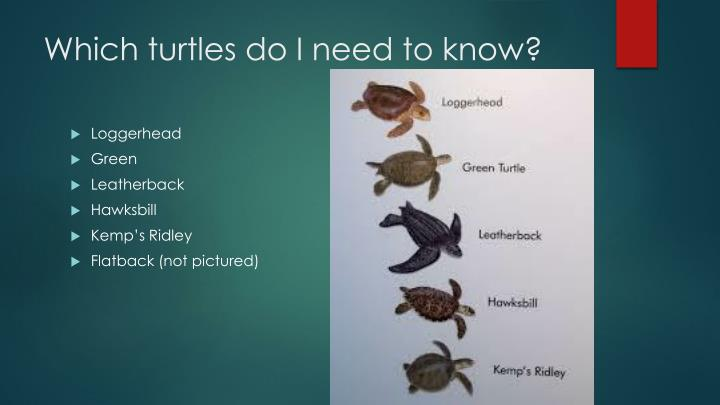 Which turtles do i need to know