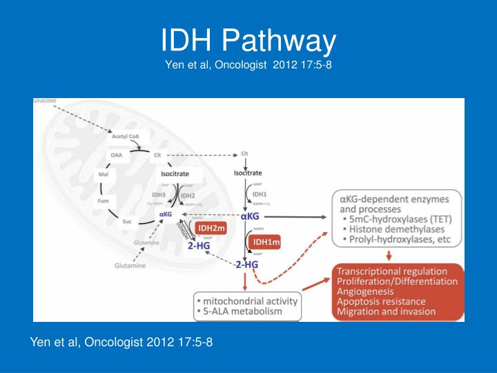 IDH Pathway