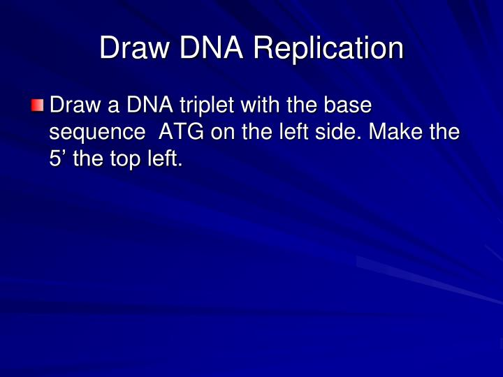 Draw DNA Replication