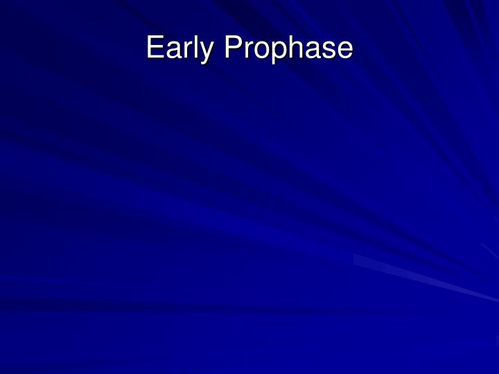 Early Prophase