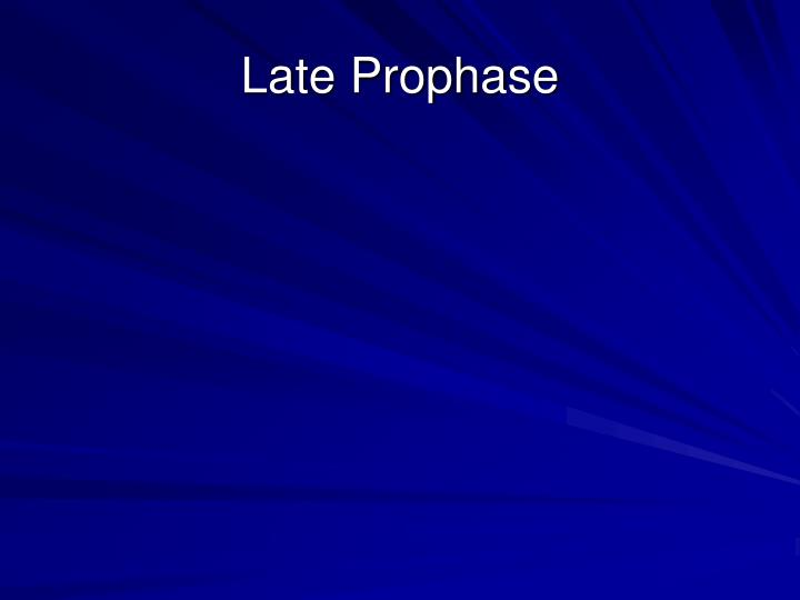 Late Prophase