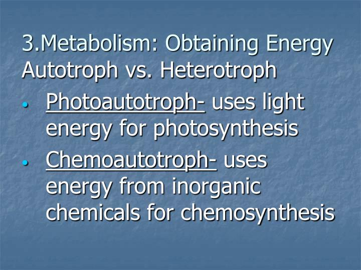3.Metabolism: Obtaining Energy
