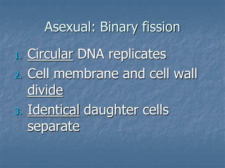 Asexual: Binary fission