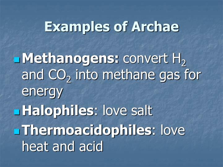 Examples of Archae