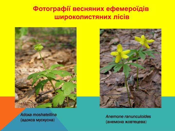 Фотографії весняних