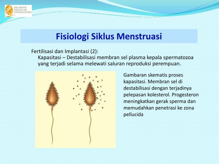 Fisiologi Siklus Menstruasi