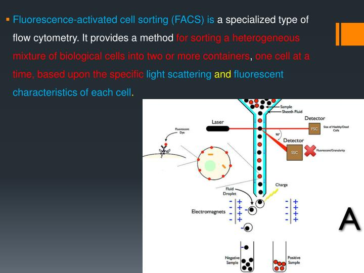 Fluorescence-activated cell sorting (FACS) is