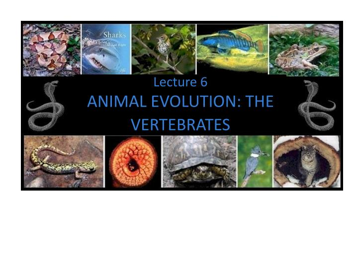 lecture 6 animal evolution the vertebrates