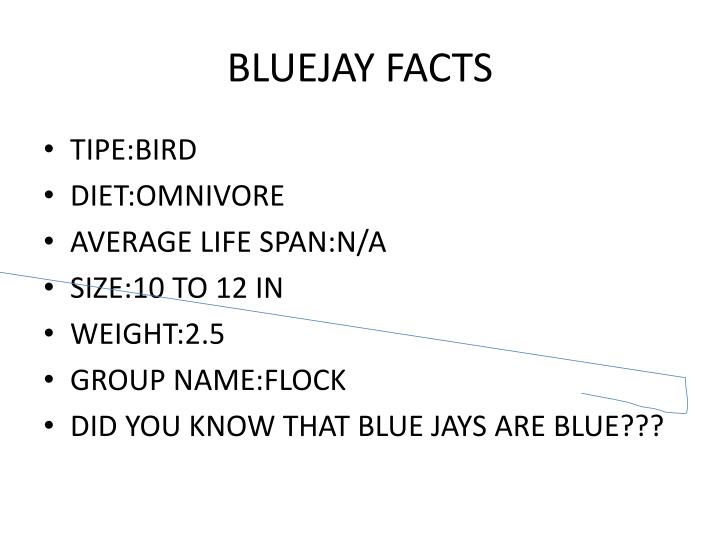 BLUEJAY FACTS