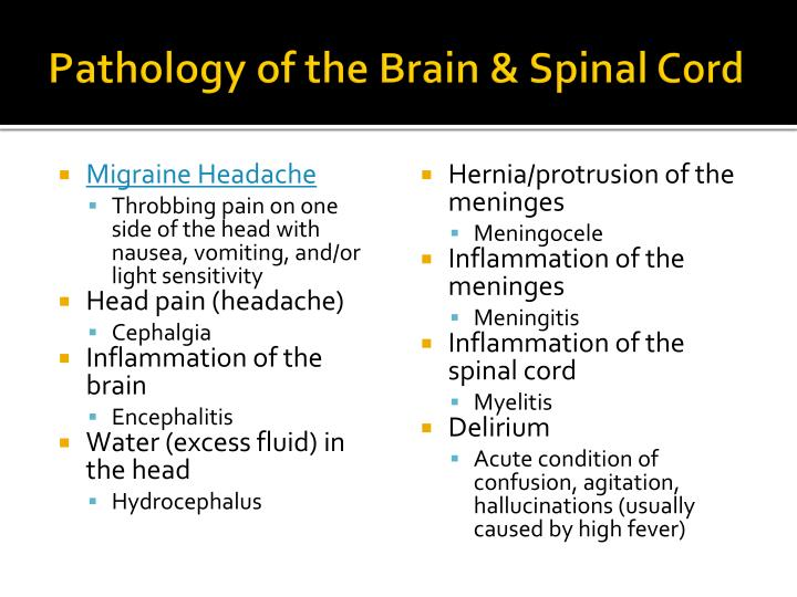 Pathology of the Brain & Spinal Cord