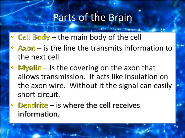 Parts of the brain1
