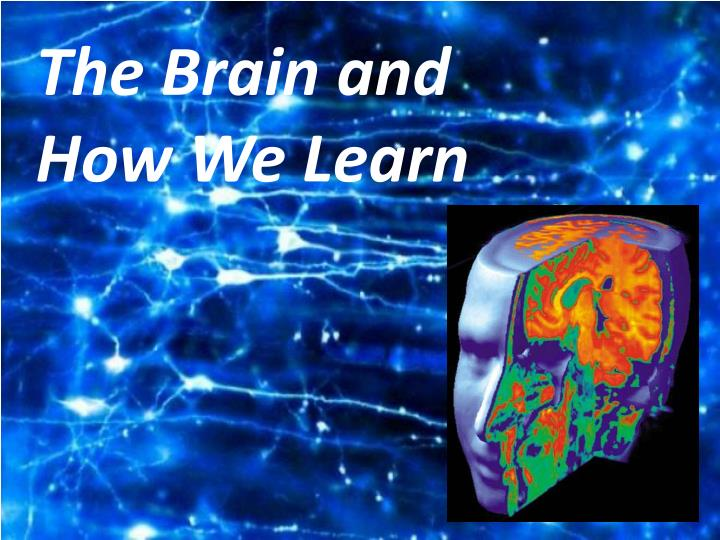 The Brain and How We Learn