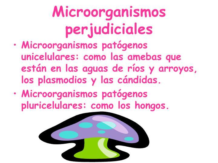 Microorganismos perjudiciales