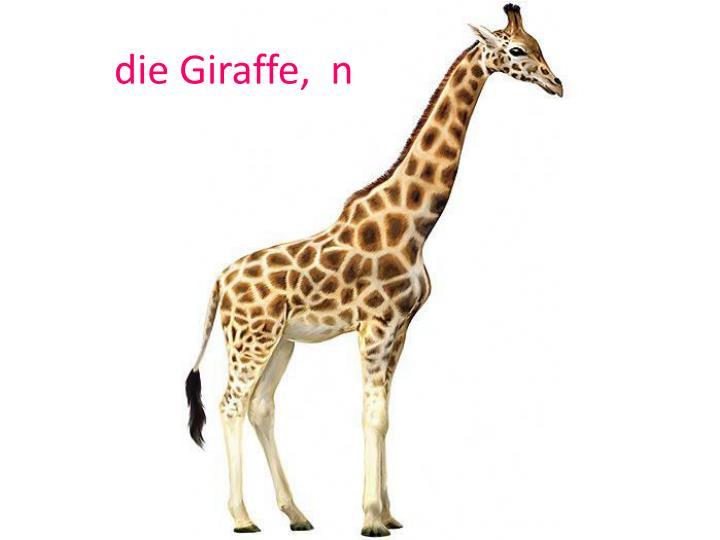 die Giraffe,  n