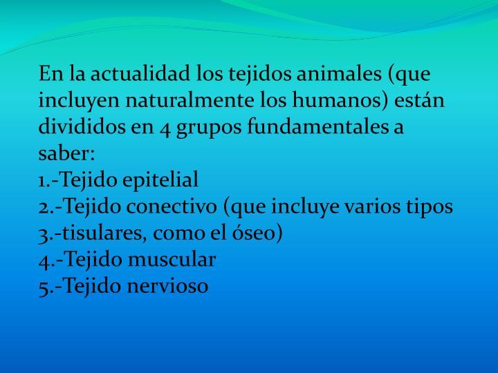 En la actualidad los tejidos animales (que incluyen naturalmente los humanos) están divididos en 4 grupos fundamentales a saber: