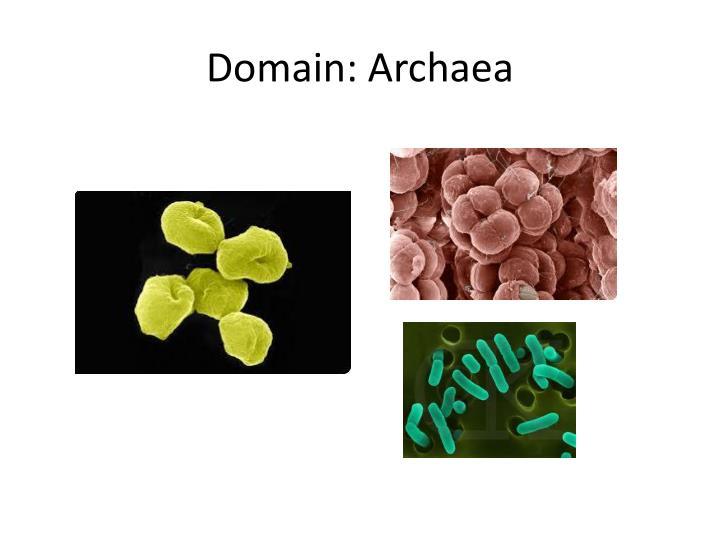 Domain: