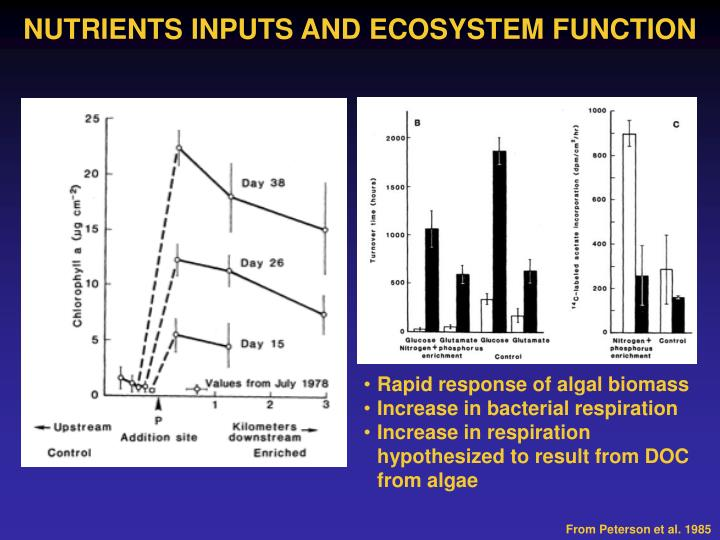 NUTRIENTS INPUTS AND ECOSYSTEM FUNCTION