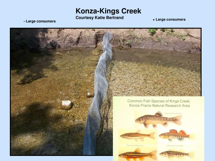 Konza-Kings Creek