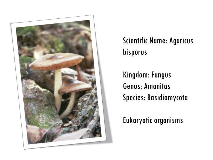 Scientific Name: