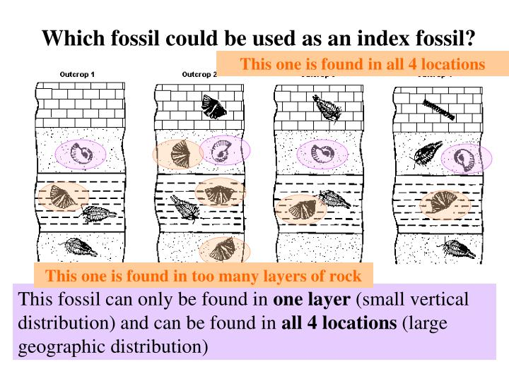 Which fossil could be used as an index fossil?