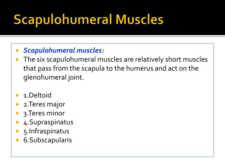 Scapulohumeral