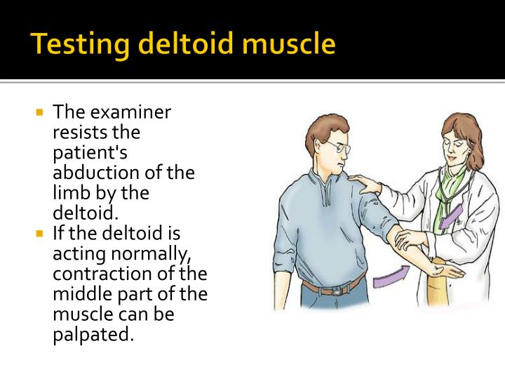 Testing deltoid muscle