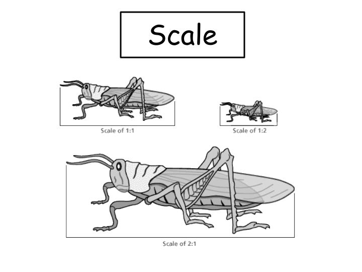 Scale