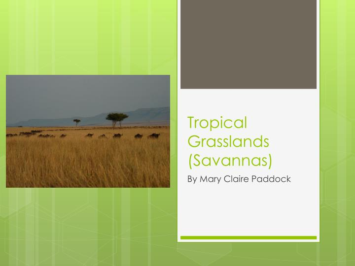 Tropical grasslands savannas