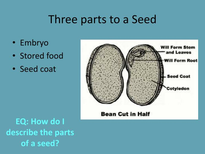 Three parts to a Seed