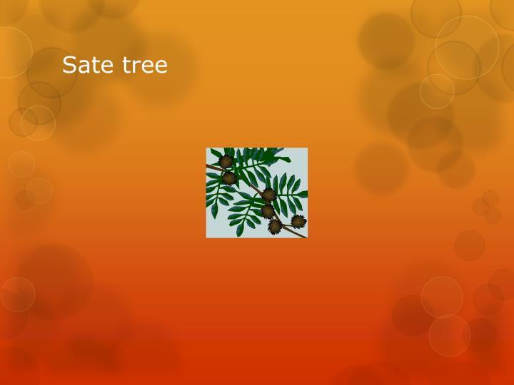 Sate tree