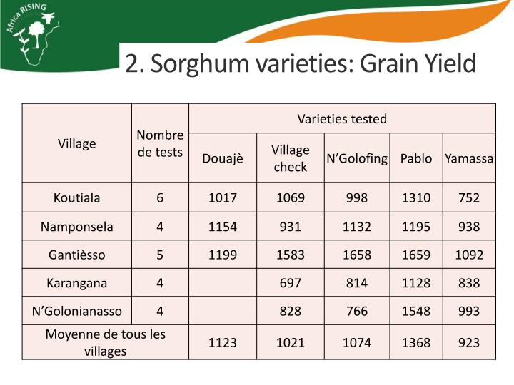2. Sorghum varieties: Grain Yield