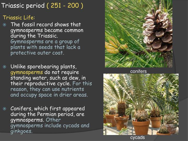 Triassic Period Plants PPT - 13.3 M esozoic E...