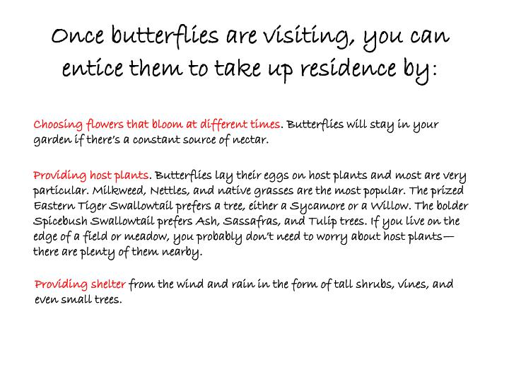 Once butterflies are visiting you can entice them to take up residence by