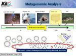 metagenomic analysis