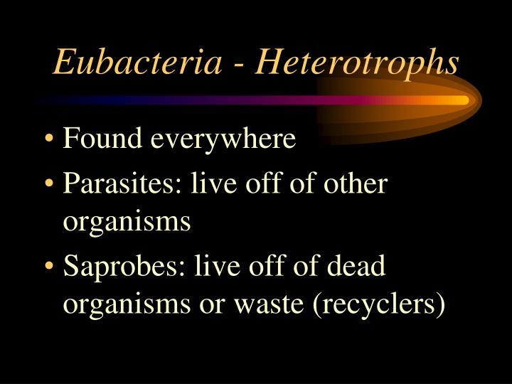 Eubacteria - Heterotrophs