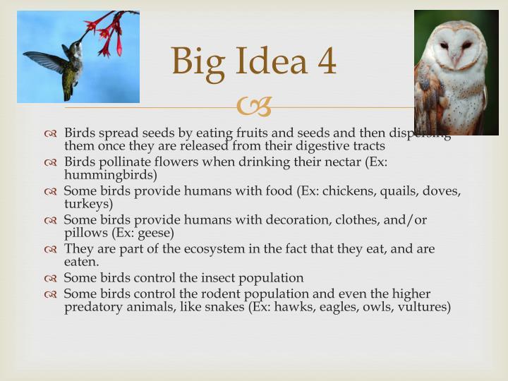 Big Idea 4