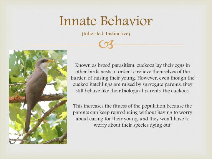 Innate Behavior