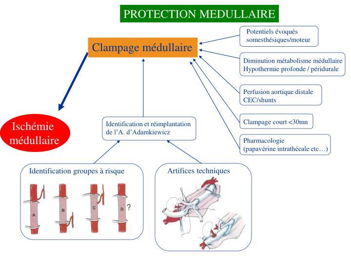 download photoautotrophic sugar free medium micropropagation as