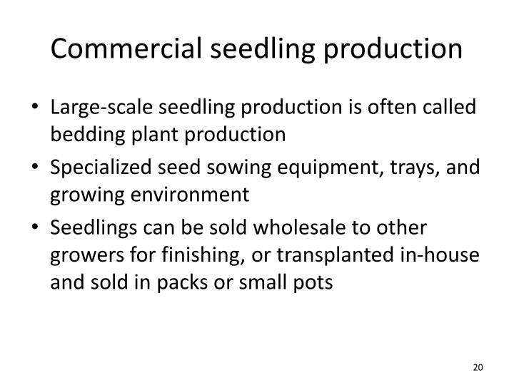 Commercial seedling production
