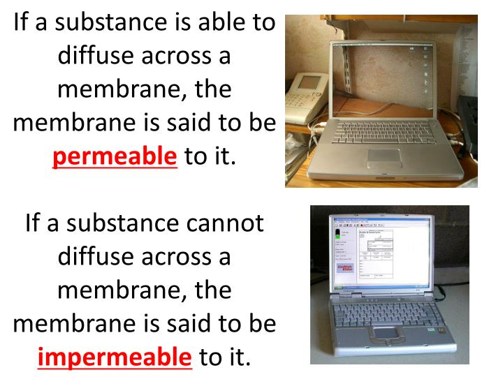 If a substance is able to diffuse across a membrane, the membrane is said to be