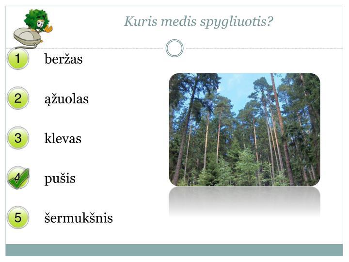 Kuris medis spygliuotis?