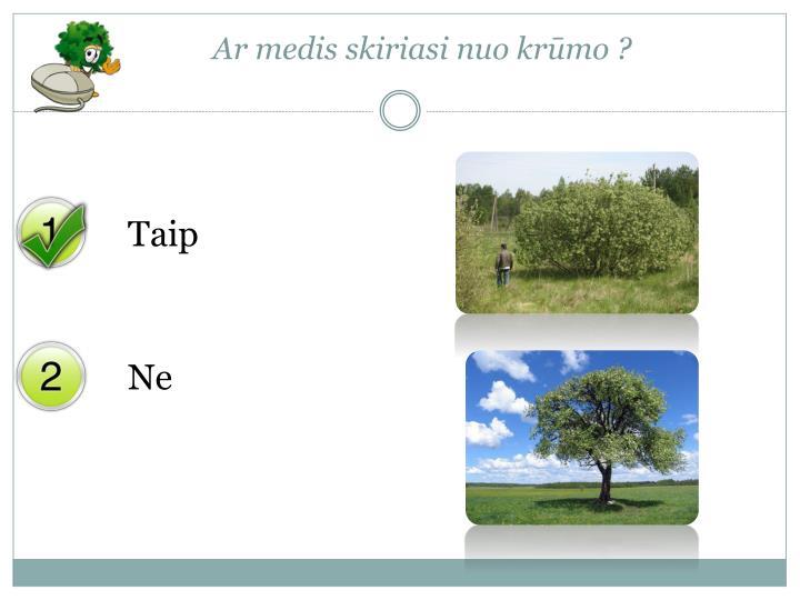 Ar medis skiriasi nuo krūmo ?