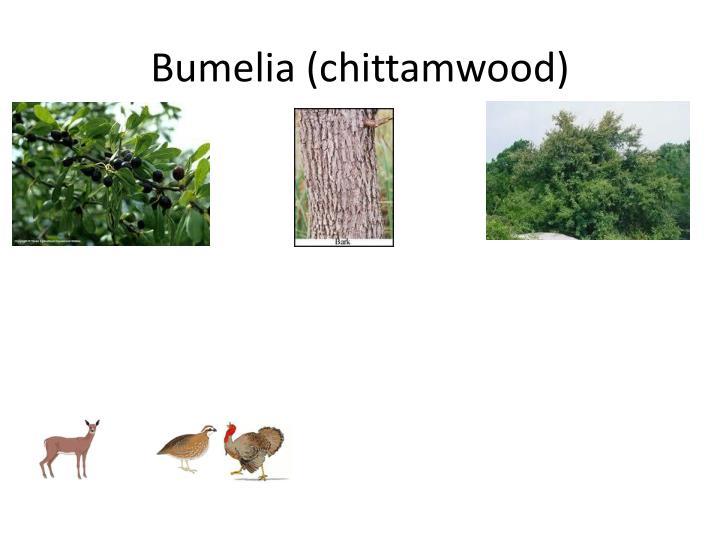 Bumelia
